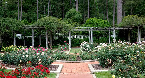 Rose garden designs rose bushes for Garden design with roses